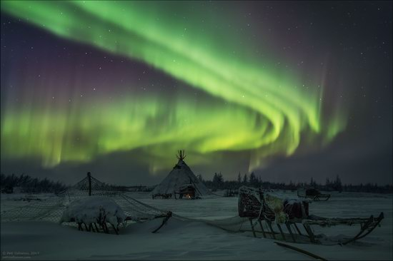 Life of the Nenets Reindeer Herders in the Russian North, photo 3