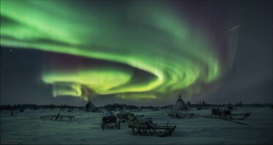 Life of the Nenets Reindeer Herders in the Russian North, photo 4