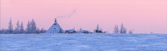 Life of the Nenets Reindeer Herders in the Russian North, photo 6