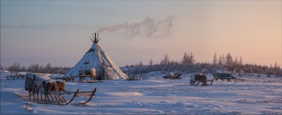 Life of the Nenets Reindeer Herders in the Russian North, photo 8