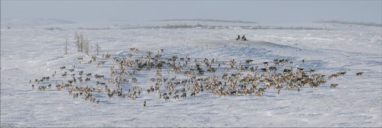Life of the Nenets Reindeer Herders in the Russian North, photo 9