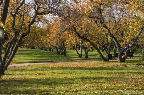 Golden autumn in Kolomenskoye, Moscow, Russia, photo 9