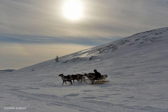 Nenets Reindeer Herders of Yamal, Russia, photo 12