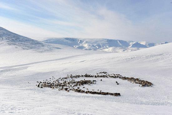 Nenets Reindeer Herders of Yamal, Russia, photo 13