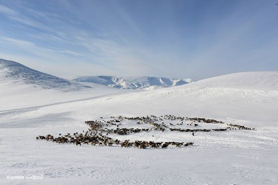 Nenets Reindeer Herders of Yamal, Russia, photo 15