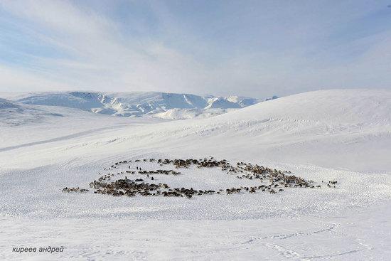 Nenets Reindeer Herders of Yamal, Russia, photo 17