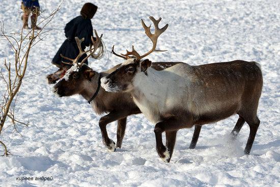Nenets Reindeer Herders of Yamal, Russia, photo 18