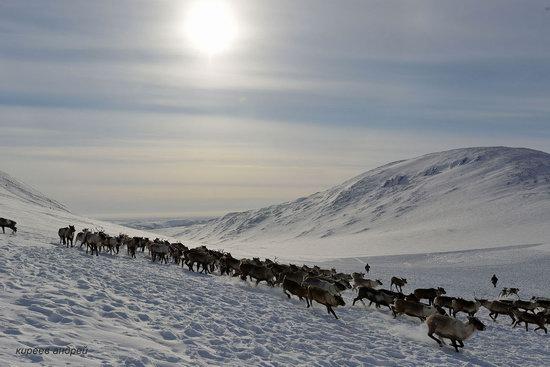 Nenets Reindeer Herders of Yamal, Russia, photo 19
