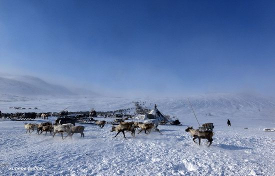 Nenets Reindeer Herders of Yamal, Russia, photo 2