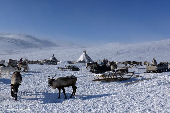 Nenets Reindeer Herders of Yamal, Russia, photo 3