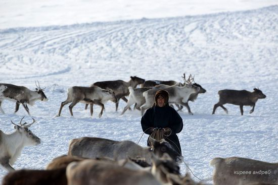 Nenets Reindeer Herders of Yamal, Russia, photo 4