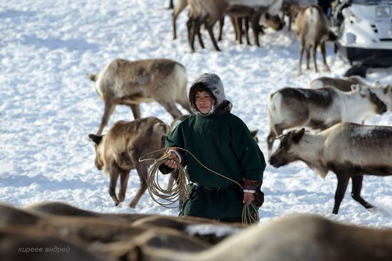 Nenets Reindeer Herders of Yamal, Russia, photo 5