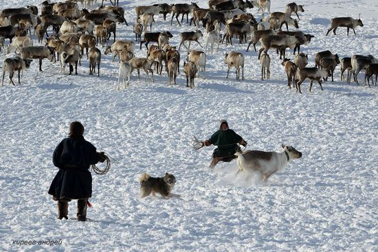 Nenets Reindeer Herders of Yamal, Russia, photo 6