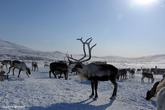 Nenets Reindeer Herders of Yamal, Russia, photo 7