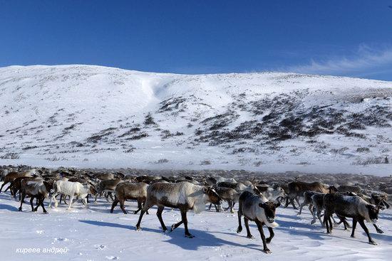 Nenets Reindeer Herders of Yamal, Russia, photo 9