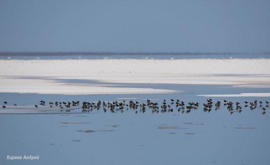Lake Elton, Volgograd region, Russia, photo 20