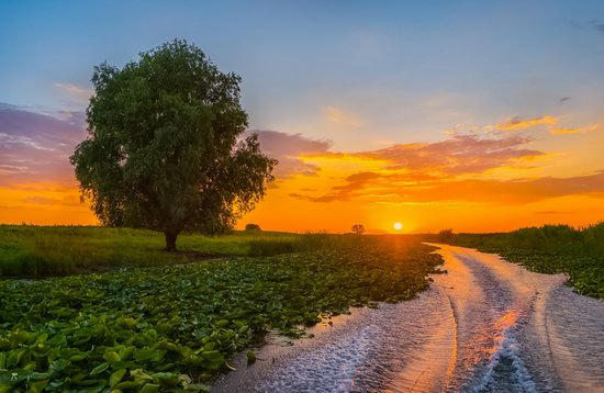 Summer sunset in the Volga River delta, Astrakhan Oblast, Russia, photo 4