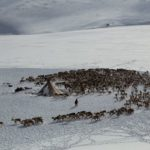 Life of Reindeer Herders of the Polar Urals