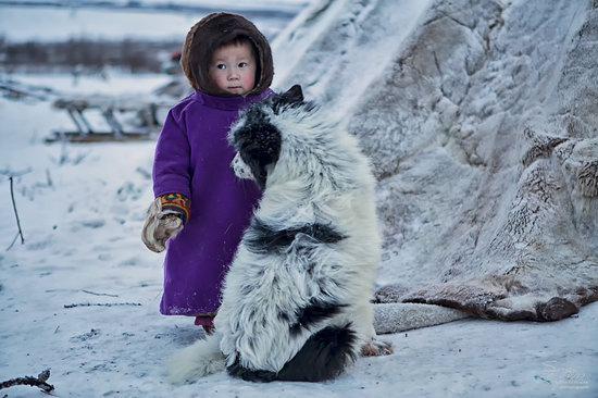Life of Reindeer Herders of the Polar Urals, Russia, photo 16