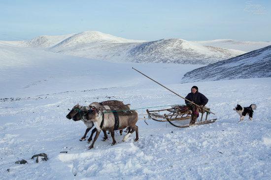 Life of Reindeer Herders of the Polar Urals, Russia, photo 27