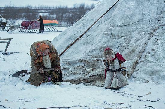 Life of Reindeer Herders of the Polar Urals, Russia, photo 4