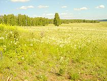 Summer in the Chelyabinsk region