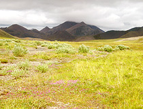 Chukotka nature