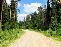 Forest road in the Ivanovo region