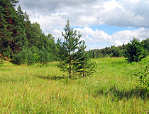 Ivanovo region forest