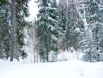 Komi region winter forest