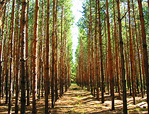 Artificial forest in Kurgan oblast