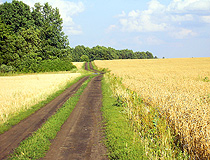 The road through the field in Lipetsk oblast