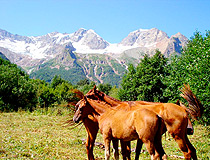 North Ossetia region horses
