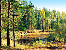 Forests cover a significant part of Novgorod oblast