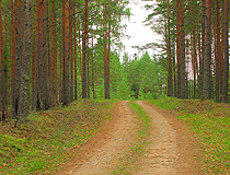 Forest in the Pskov region