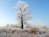 Winter in the Saratov region
