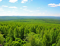 Sverdlovsk oblast is rich in forests