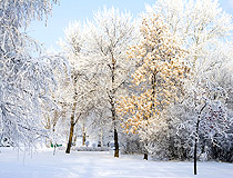 Winter in the park in Ufa