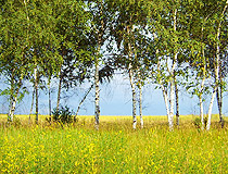 Voronezh region nature