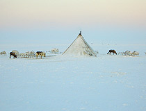 Winter in Yamalo-Nenets okrug