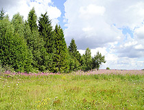 Summer in Yaroslavl oblast